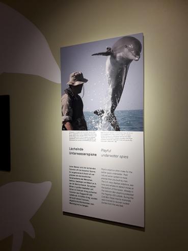 Delfin-spion