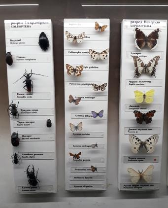 Fluturi_Plevna_Museum